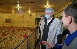 پیشگیری از بیماریها در مزارع پرورش بوقلمون