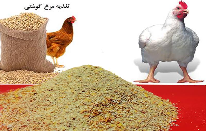 استانداردهای مورد نیاز در تهیه کنستانتره مرغ گوشتی