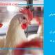 میزان آب مصرفی مرغداری