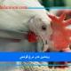 ویتامین-های-مرغ-گوشتی.jpg