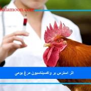 اثر استرس بر واکسیناسیون مرغ بومی
