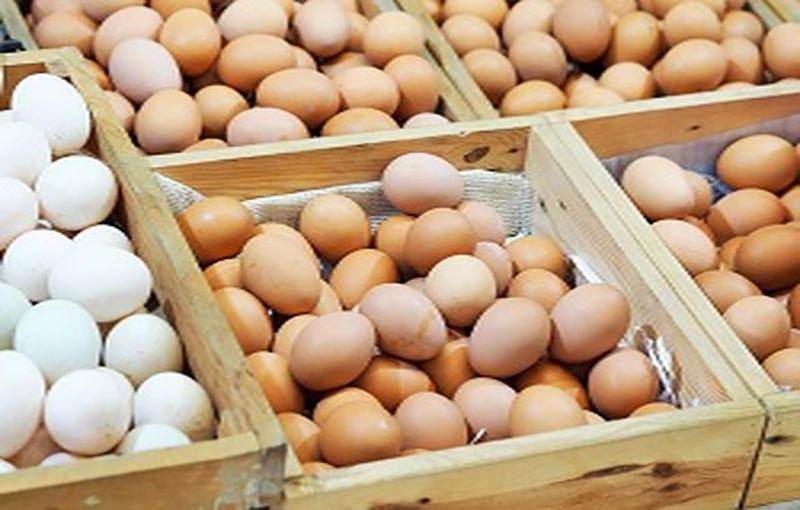 ارزش غذایی و کیفیت تخم مرغ محلی