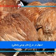 اسهال در مرغ های بومی (محلی)