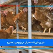 میزان خوراک مصرفی مرغ بومی ( محلی)