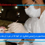 واکسیناسیون مرغ بومی (محلی)، هر آنچه که در مورد آن باید بدانیم