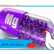 بررسی کمبود منیزیم در تغذیه طیور