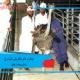 بیماری های باکتریایی شترمرغ(سل،سیاه زخم)