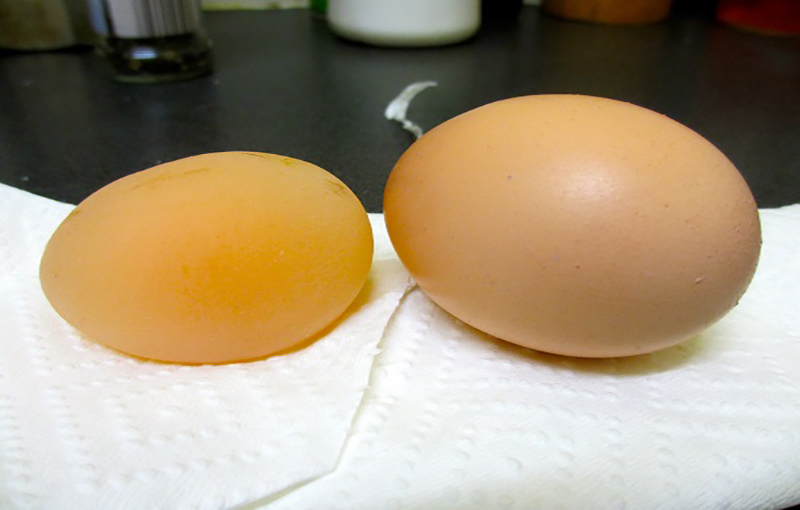 کمبود ویتامین D در تغذیه طیور(تخم بدون پوست)