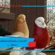 اهداف کبوترداری(تولید گوشت،تخم،فضولات و مسابقه.....).jpg
