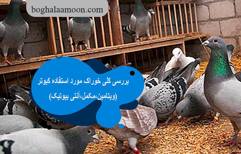 بررسی کلی خوراک مورد استفاده کبوتر(ویتامین،مکمل،آنتی بیوتیک)