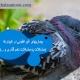 بیماریهای غیرعفونی در کبوترها(مشکلات پا،مشکلات تخم گذاری و...)