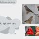 راههای تشخیص فنچ نر از فنچ ماده1.jpg