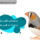 شرایط مناسب نگهداری فنچ ( پرنده ناز ) در قفس و محيط