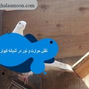 نقش حرارت و نور در آشیانه کبوترها