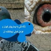 نگاه کلی به بیماریهای کبوتر و عوامل اصلی ایجادکننده آن