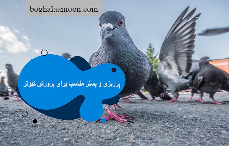 پرریزی و بستر مناسب برای پرورش کبوتر
