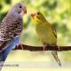 احساسات معمولی در مرغ عشقها