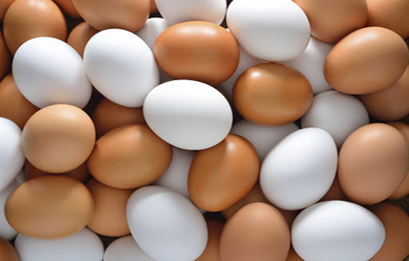 تخم نطفه دار خروس لاری