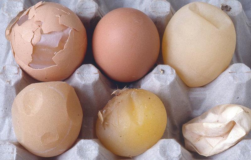 معیارهای ارزیابی کیفیت پوسته تخم مرغ
