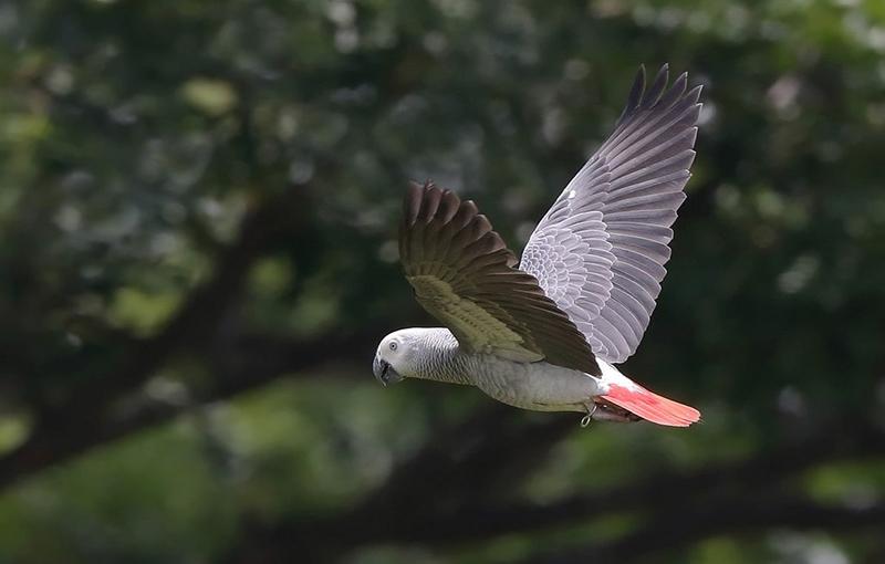 جلوگیری از مرگ و میرکاسکوهای وحشی در پرنده فروشی ها1