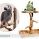 درخت پرنده و ساختن یک درخت پرنده برای مرغ عشق