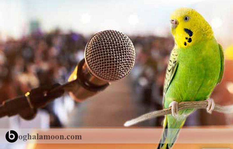 سخنگویی مرغ عشق و آموزش آن