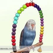 سرگرم کردن مرغ عشق ،اسباب بازی مرغ عشق