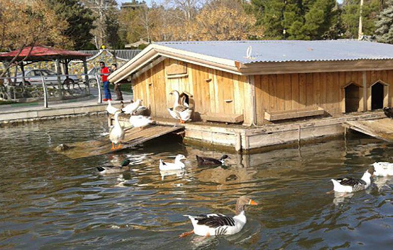 آنفلوآنزای اردک بیماری عفونی اردک