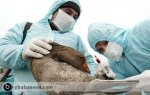 بیماریهای میکروبی و قارچی اردک
