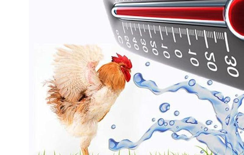 درجه حرارت سالن پرورش جوجه و کنترل آن1