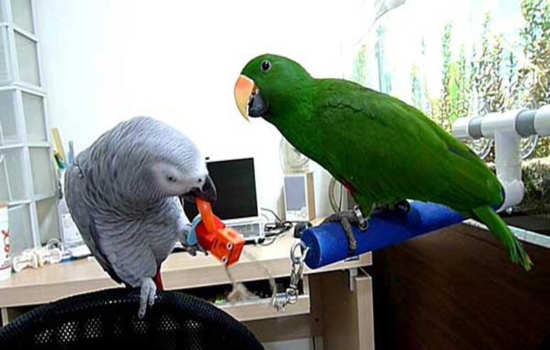 رابطه کاسکو با حیوان یا پرنده خانگی دیگر