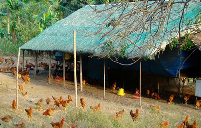 آشیانه و محل نگهداری مرغ ارگانیک
