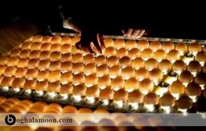 انبارداری تخم مرغ های بارور قبل از استفاده برای جوجه کشی