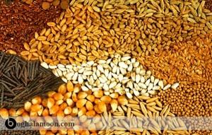 دانه های غلات و فرآورده های جانبی آنها در تغذیه طیور