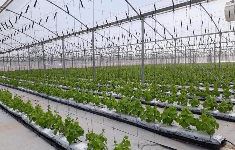 تولیدات ارگانیک به چه منظوری صورت می پذیرد