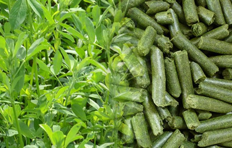 منابع مواد معدنی و ویتامین در تغذیه طیور ملاس در تغذیه طیور