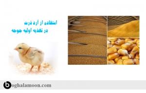استفاده از آرد ذرت در تغذیه اولیه جوجه