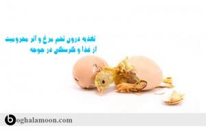 تغذيه درون تخم مرغ و اثر محرومیت از غذا و گرسنگی در جوجه