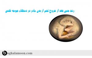 رشد جنین بعد از خروج تخم از بدن مادر در دستگاه جوجه کشی