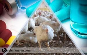 آشنایی با استعمال آنتی بیوتیک ها و افزایش قدرت اورومایسین