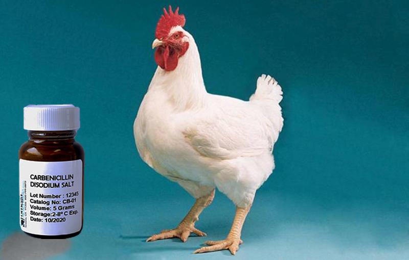 داروی کربنی سیلین و سفرتاکسیمدر طیور